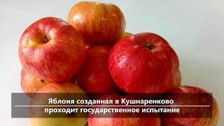UTV. Новости центра Башкирии за 7 октября