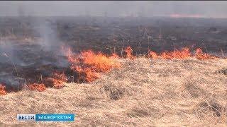 В Башкирии из-за резкого потепления увеличилось количество возгораний сухой травы