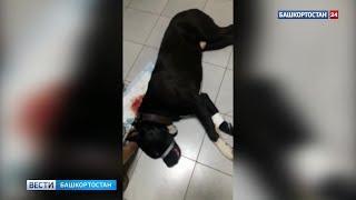 Лезвие вошло на 25 сантиметров: врачи борются за жизнь раненой в Башкирии собаки