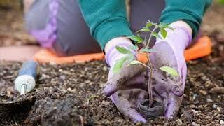С 1 января заработал новый закон о садоводстве и огородничестве
