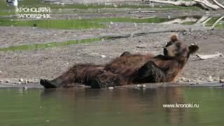 МЕДВЕДЬ И ЛОСОСЬ. Bear and Salmon. Happy Bear.