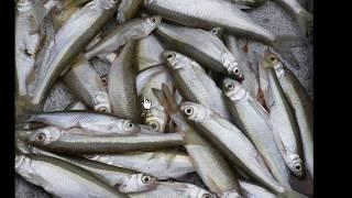 Отличная рыбалка на реке Белая республики Башкортостан.