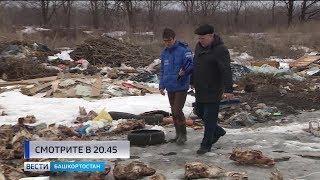 Большую свалку костей обнаружили в Уфимском районе