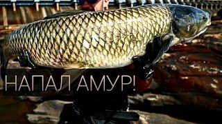 НАПАДЕНИЕ АМУРА!!! Неизвестная рыба! Подводная охота - ТРОФЕЙНЫЙ САЗАН И АМУР
