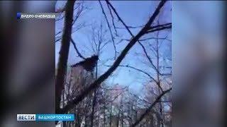 Мелеузовском районе заметили редкую птицу