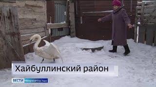 Новости районов: детская поликлиника в Салавате и спасение лебедя в Хайбуллинском районе