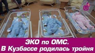 ЭКО по ОМС. В Кузбассе родилась тройня