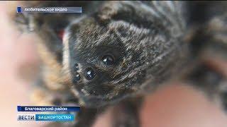 Башкирию оккупировали ядовитые пауки: есть пострадавшие