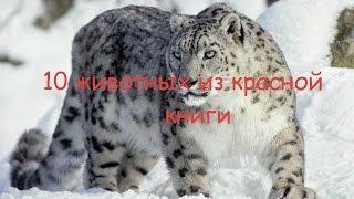 10 животных из красной книги