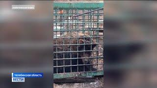 «Верю, что он жив»: в Башкирии объявили награду за информацию о пропавшем медведе