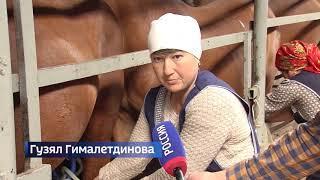 В Башкирии начался сезон кумыса – на производстве побывали корреспонденты «Вестей»