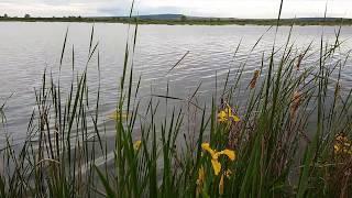 Природа Башкирии. Красивое озеро Яушильды. Летний вечер