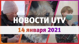 Новости Уфы и Башкирии 14.01.21: вакцинация от COVID, вязаный стрит-арт и собачий концлагерь