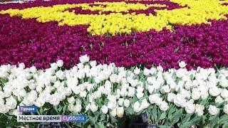Съемочная группа «Руссо Туристо» побывала на празднике тюльпанов в Стамбуле