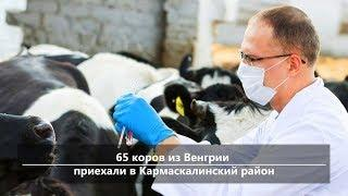 UTV. Новости центра Башкирии за 1 апреля