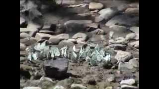 сплав по реке Большой Инзер 2009