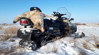 охота на волков в казахстане 2019 !(WOLF HUNTING)
