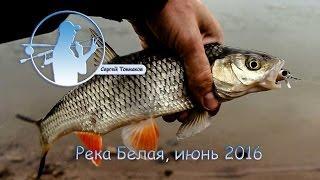 Река Белая июнь 2016