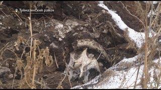 «Вспышка болезней может быть»: жители Башкирии жалуются на вскрытие скотомогильника