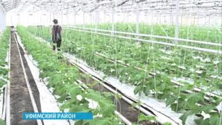 Башкирские овощеводы готовятся к новому сезону