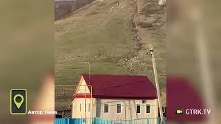 «Остался без обеда»: в Башкирии медведь устроил погоню за стадом овец (ВИДЕО)