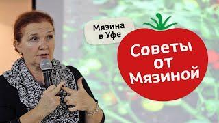 Как вырастить большой урожай томатов. Советы от Мязиной
