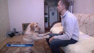 В Уфе слепого человека заставили оплатить проезд его собаки-поводыря