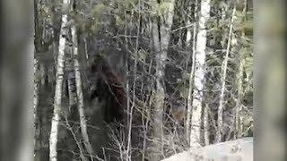 На дороге в Башкирии увидели медведя
