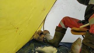 ОКУНЬ хорошенький ❌ Зимняя рыбалка в Башкирии на Белом озере #12