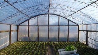Самодельная теплица 6х12 для помидоров и огурцов
