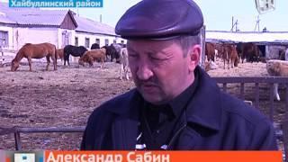 Фермеры Хайбуллинского района Башкирии в отчаянии