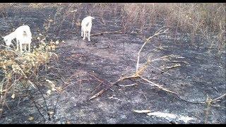 Пожары и поджоги в нашей деревне.