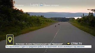 В Башкирии лисиц, играющих на дороге, засняли на видео