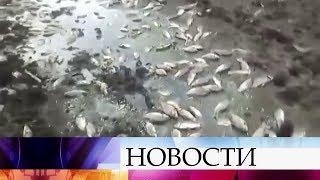 Масштабное экологическое бедствие началось в водоемах Астраханской области.