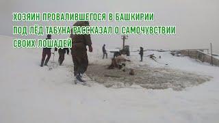 Хозяин провалившегося в Башкирии под лёд табуна рассказал о самочувствии своих лошадей