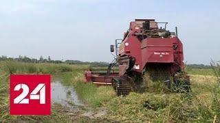 Амур поднялся до 5 метров: аграрии пытаются спасти урожай - Россия 24