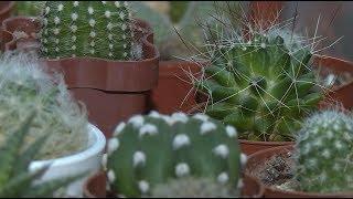 Уфимка держит дома 150 кактусов
