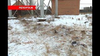 В Улан-Удэ очевидцы рассказали подробности нападения собак на ребенка