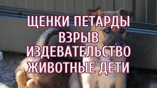 Школьники жестоко убили больше десятка щенков с помощью петард в Башкирии