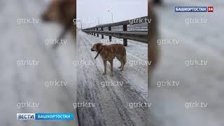 Уфимский Хатико: на трассе в Башкирии пес не отходил от погибшей собаки, рискуя жизнью