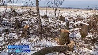 В Башкирии незаконно вырубили целый километр деревьев