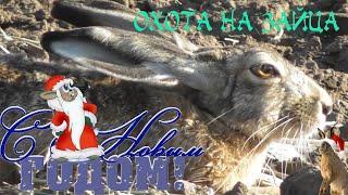 Охота на зайца. Первые зайцы Нового года.