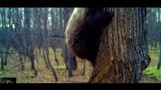В Башкирии в лесу в объектив камеры попал медведь, ворующий мед у пчел