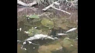 В Башкирии в реке Тюй погибла рыба