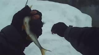 Фидерная рыбалка на озере .Теплое озеро,Уфа, Башкортостан.