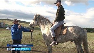 Как в республике готовят скакунов для Сабантуев –репортаж «Вестей»