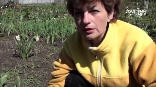 """Как вырастить спаржу. Сайт """"Садовый мир"""""""