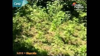 Оперативники обнаружили незаконный огород с коноплей