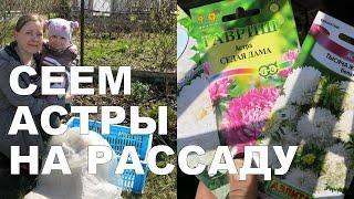 Как вырастить рассаду АСТРЫ в мини-парничке ????// How to grow aster from seed in mini-greenhouse