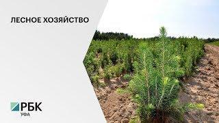 РБ занимает первое место в ПФО по посадке лесов